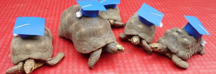 Grado tortugas